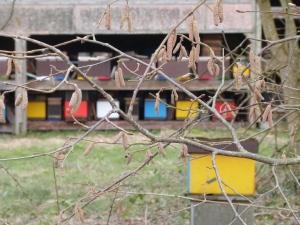 Sy, Belgium, honeybees